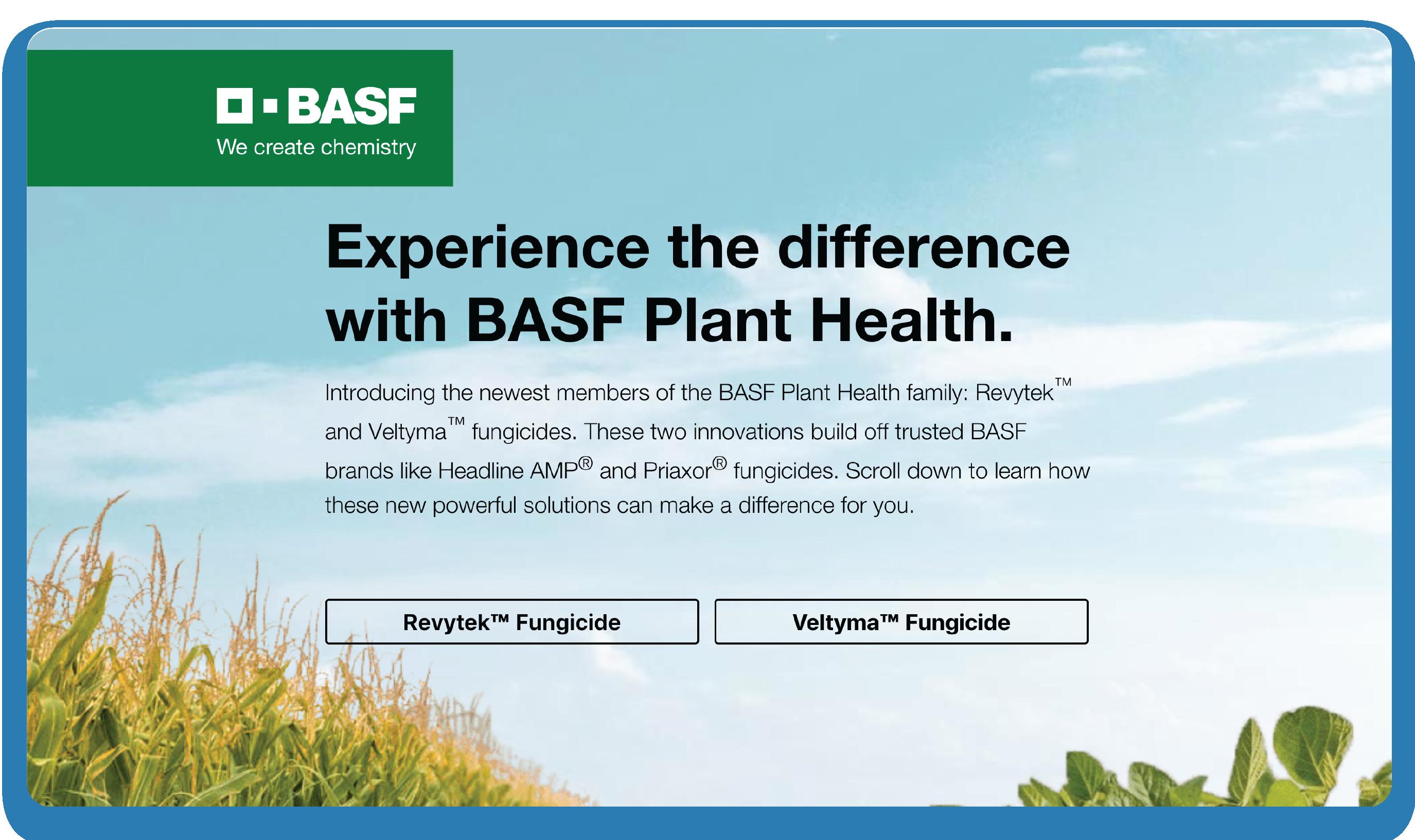 BASF case study 2