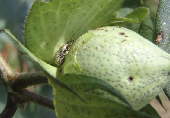 Pest control case study 1