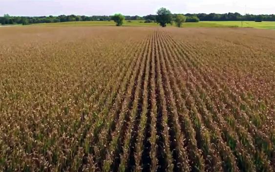 Crop video opening